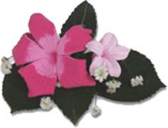 5_petal
